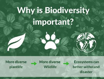 Importance of Biodiversity maintenance and ecological balancing